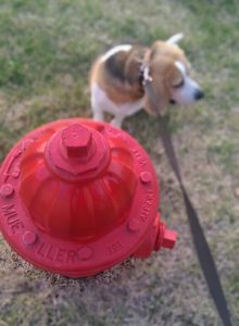 Apple & Fire Hydrant